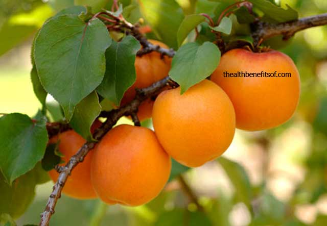 Health-Benefits-of-Apricot