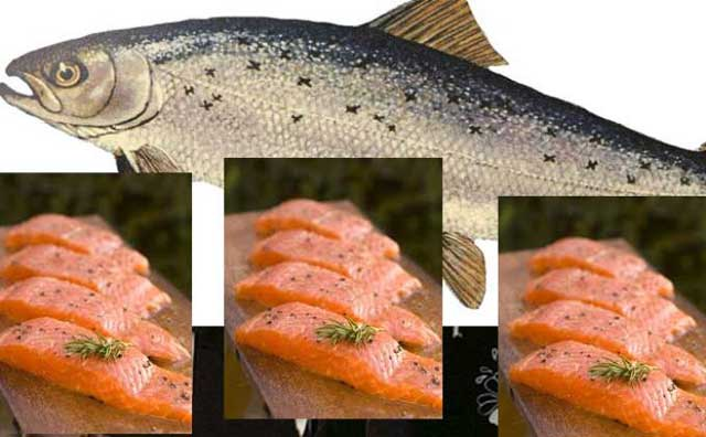Health benefits of salmon nutritional value of salmon for Salmon fish nutrition