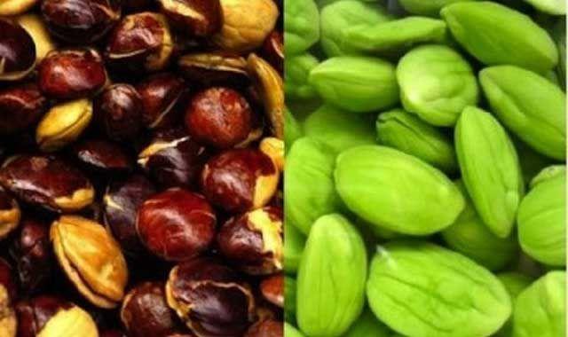 jengkol health benefits