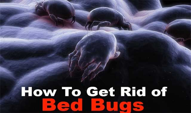 home remedy to get rid of bed bugs