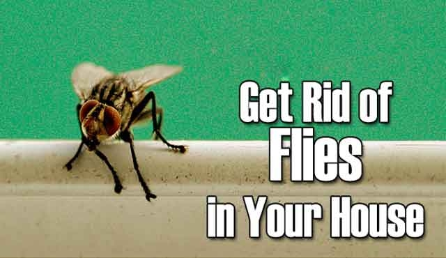 home remedy to get rid of flies