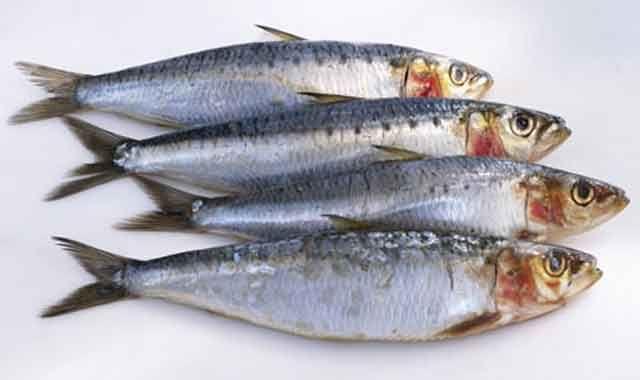 health benefits of sardines