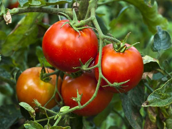 Best vegetables planted in summer
