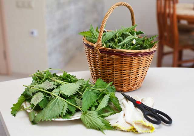 Nettle leaves Home remedy for allergies