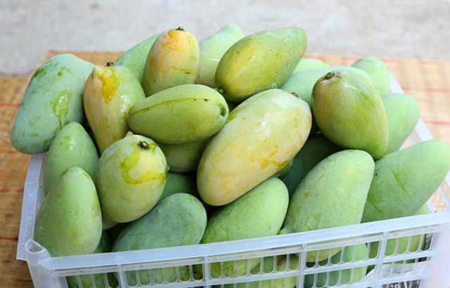 how to ripen green mangoes