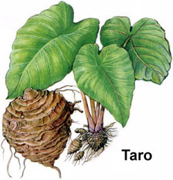 Health benefits of taro