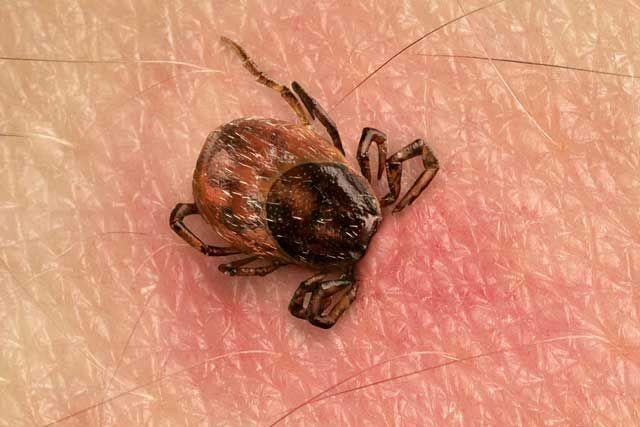 best ways for preventing tick-borne diseases