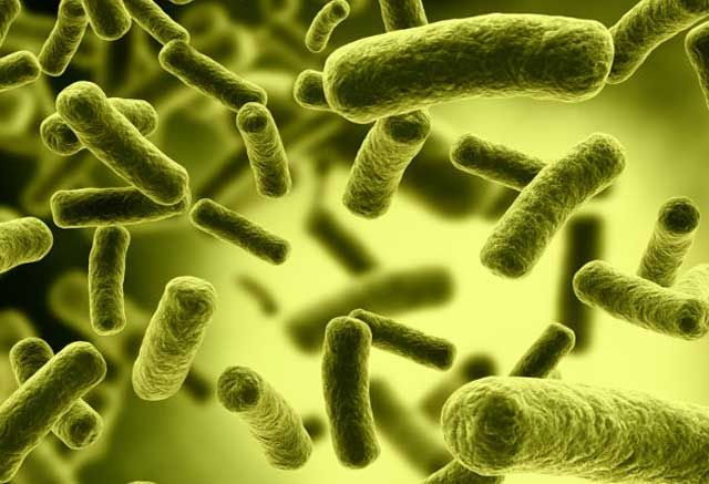 Important! Helicobacter pylori, Harmful Bacteria to Health