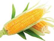 health benefits of corn