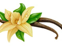 health benefits of vanilla