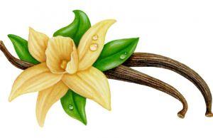 health benefits of vanilla