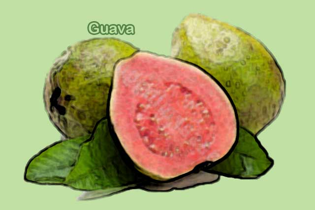 foods rich in vitamin c is guava