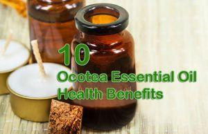 Ocotea essential oil