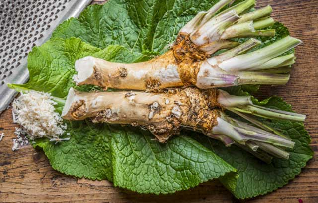 Horseradish for treating giardiasis