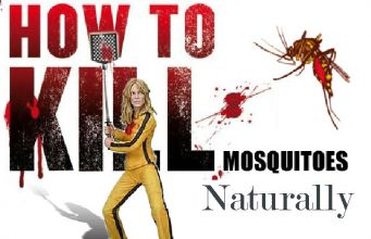 natural ways to kill mosquitoes