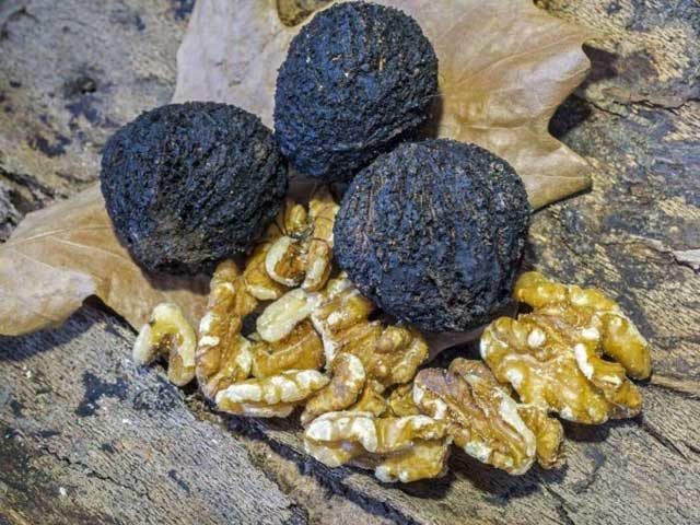 benefits of black walnut