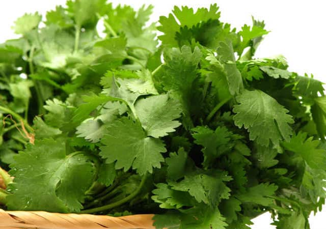 fat burning drinks coriander leaves