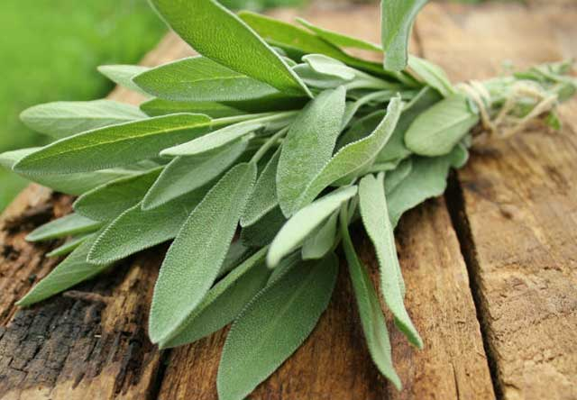 Health Benefits Of Sage, antioxidant impact