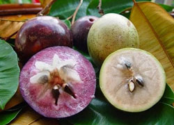 star apple fruit health benefits