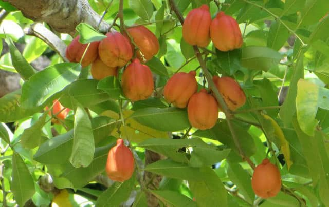 health benefits of ackee fruit