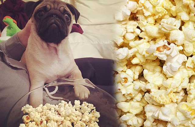 Can Dogs Eat Popcorn Safely