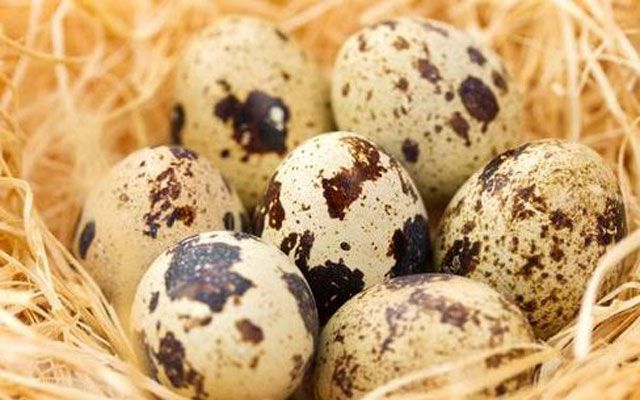 Health Benefits of Quail Eggs
