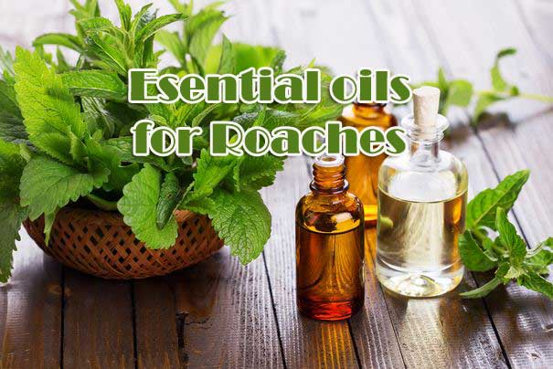 Essential Oils For Roaches