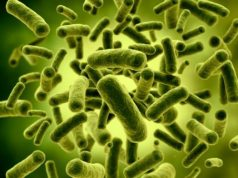 Benefits of Lactobacillus Acidophilus Bacteria