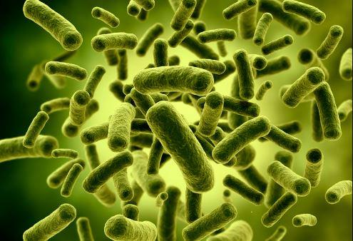 Benefits of Lactobacillus Acidophilus Bacteria