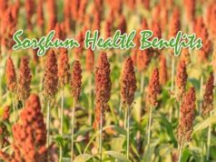 Sorghum Health Benefits