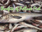 Health Benefits Of Pollock Fish
