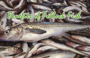 Health Benefits Of Pollock Fish