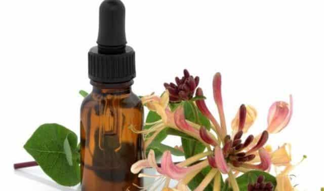 Benefits of Honeysuckle Essential Oil